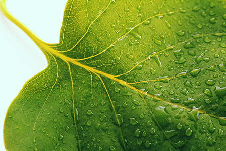 close-up photo of green leaf with water droplets