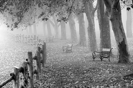 greyscale photo of bench near fence and trees