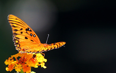 selective focus photograph of orange and black butterfly perched on flower
