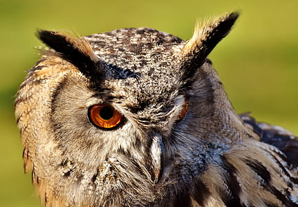 front view of a gray owl