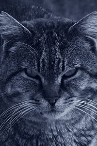 Cat in Grayscale Photo