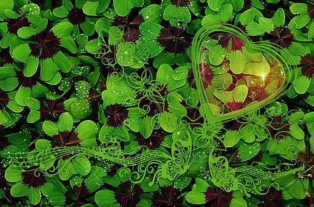 aerial view photography of green leaf plants
