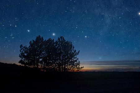 Night Tree Silhouette Stars