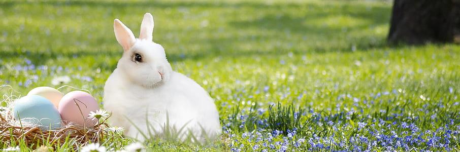 white rabbit on green grass lawn