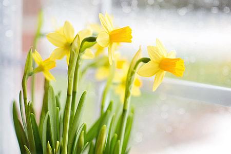 macro photography of yellow petaled flowers