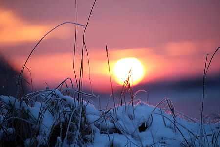 sunset, snow, winter, wintry, sun, afterglow