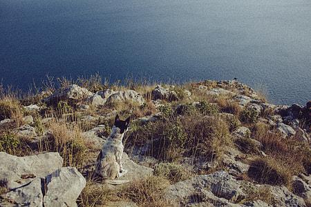 Australian Cattle dog sitting on rock hill near seashore