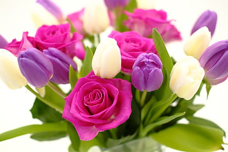 photo of purple and pink petaled flowers