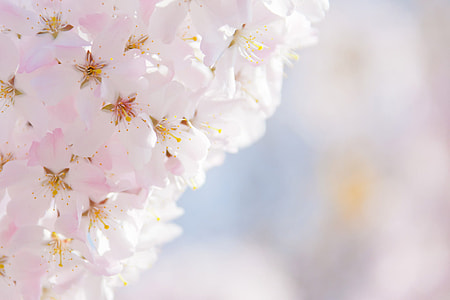 selective focal photo of pink cluster-petaled flowers