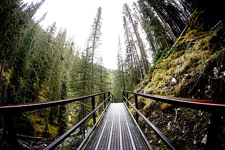black wooden bridge in the forest