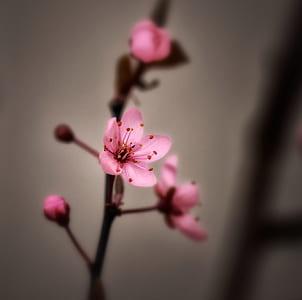 tilt shift lens of pink flowers