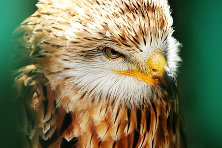 macro photography of eagle
