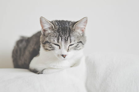 silver tabby cat lying on white surface
