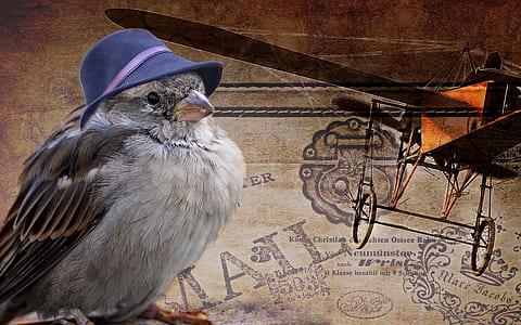 grey bird with blue hat