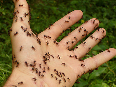 fire ants lot on person's hand