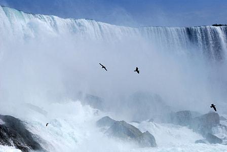 flock of birds beside waterfall