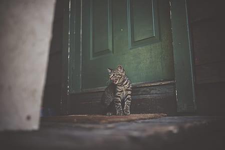 Silver Tabby Cat on Brown Doormat