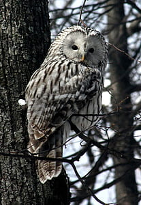 white and black owl on bare tree during daytime