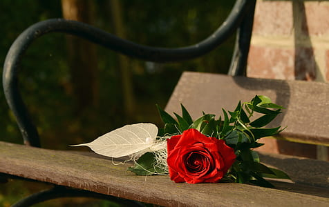 red rose on brown and black park bench