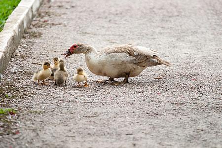 duck on street