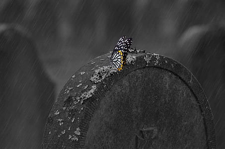 white and black butterfly perching on stone