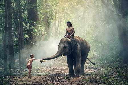 topless man riding on elephant in front topless boy inside green forest during daytime