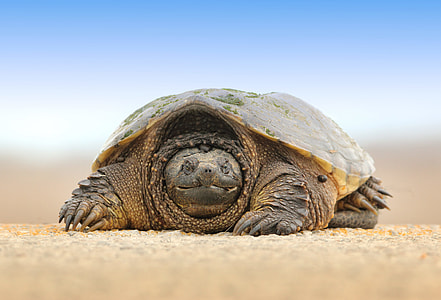 Tortoise photography