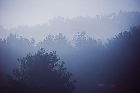 aerial view photography of forest covered by fog