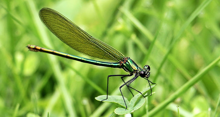 green damselfly perched on green leaf plant closeup photography