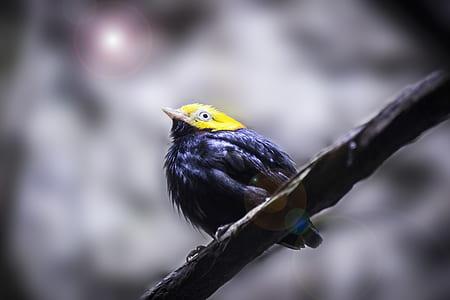 Yellow Head Black Short Beaked Bird