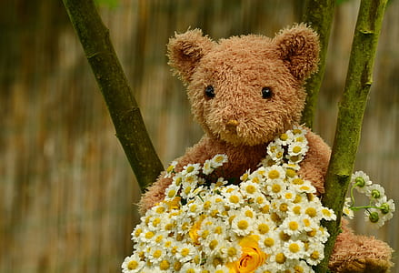 closeup photography of brown bear plush toy with bouquet of flowers