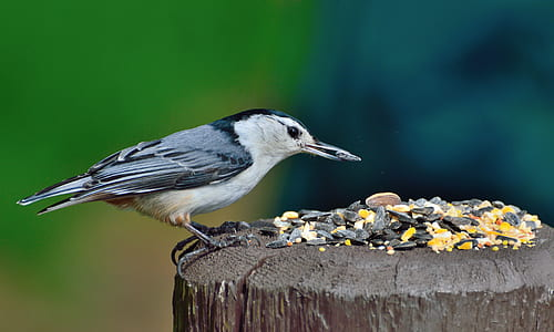 focal focus photography of gray and b lack long-beak bird perching on brown wood