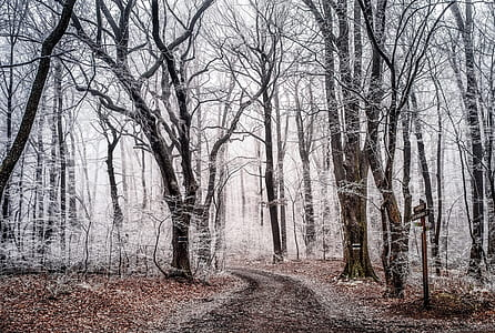 dried leaves on ground and pathway during snowy daytime