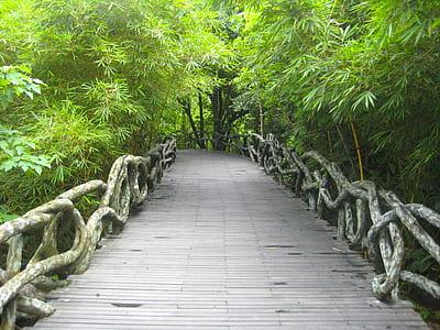 gray dock between green trees