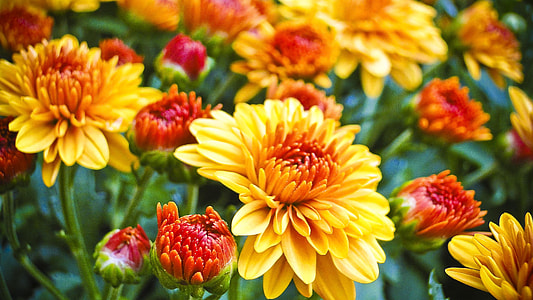 yellow and red flowers on bloom
