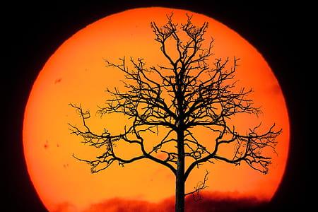 brown tree during sunset