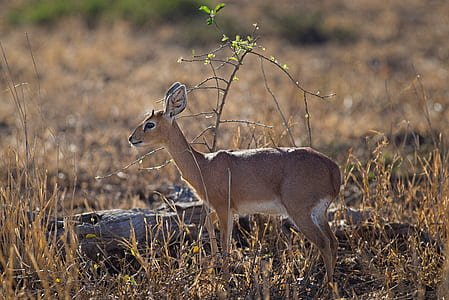 Close-up Photo of Deer