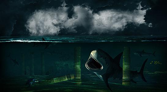 illustration of three sharks