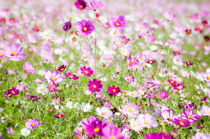 selective focus photo of purple petaled flowers