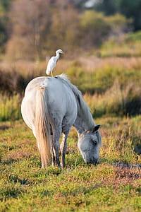 yellow beak white bird on white horse at daytime