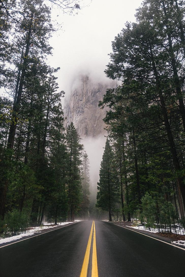 black concrete road near trees