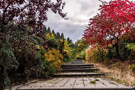 desire road in between trees and plants