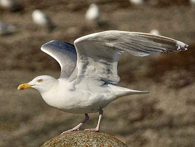 bokeh shot white and gray bird