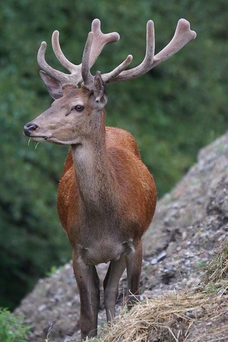 brown deer on brown rock formation during daytime
