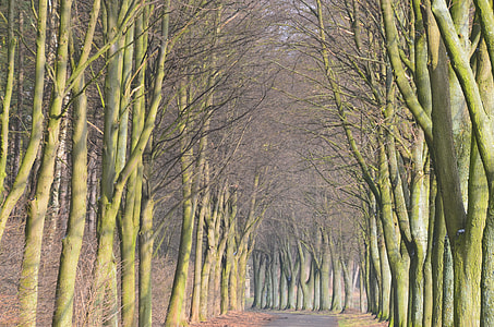 narrow road between leafless trees graphic wallpaper