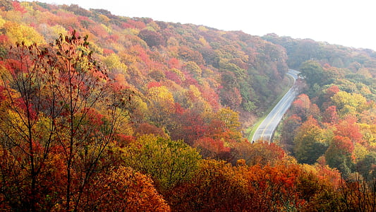 red and green leaf trees along gray concrete road