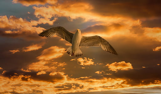 seagull in flight under cloudy sky