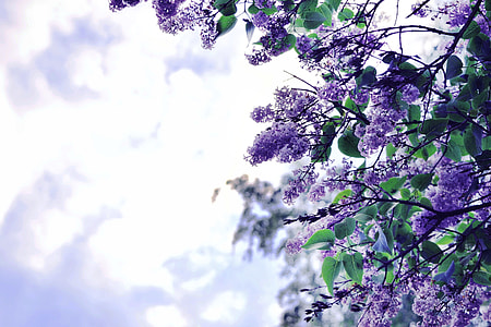 purple flowers during daytime