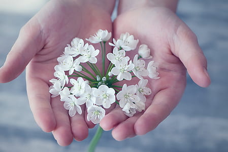 person holding white flowers