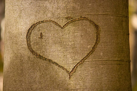 close-up photo of tree with heart engrave